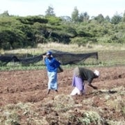 How Farmers in Kenya Might Adapt to Climate Change