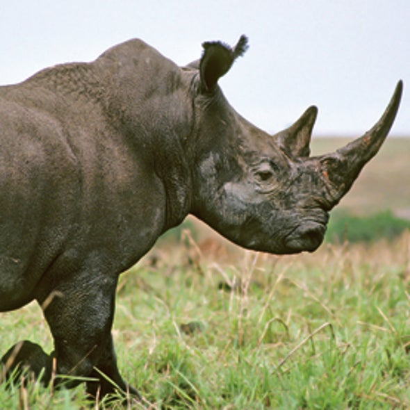 Drones Could Help Protect Kenyan Rhinos