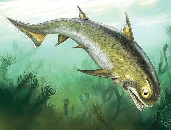 Sharklike Fossil Fills In the Jaws Family Tree