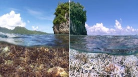 Corals Worldwide Hit by Bleaching [Slide Show]