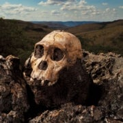 First of Our Kind: Could <i>Australopithecus sediba</i> Be Our Long Lost Ancestor?