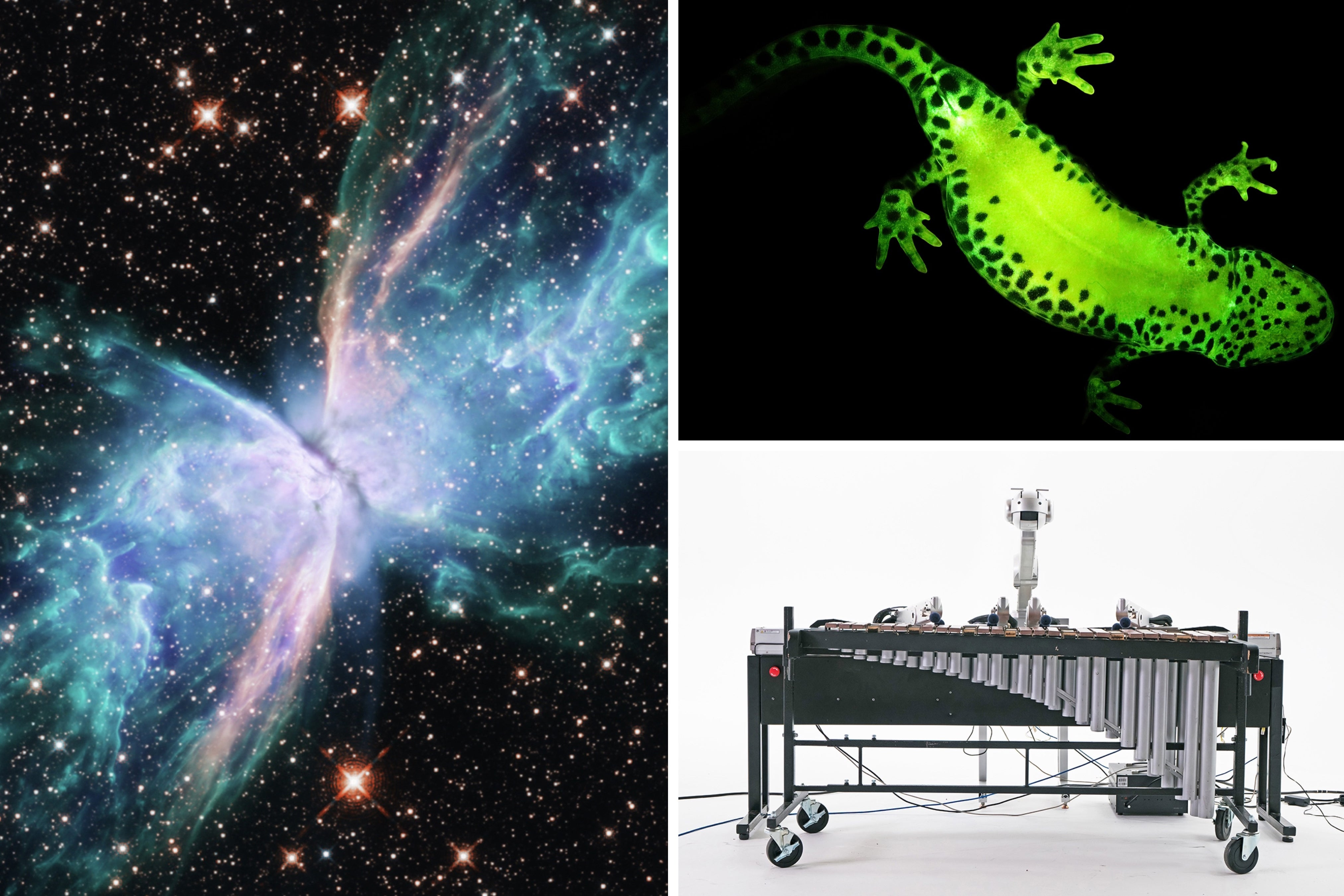 From Rapping Robots to Glowing Frogs: Our Favorite Fun Stories of 2020