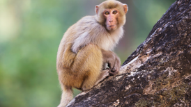 Possible Autism Biomarker Found in Monkeys