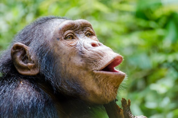 Human Speech Evolution Gets Lip-Smacking Evidence
