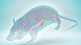 Turning Lab Animals Transparent