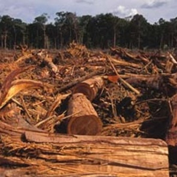 Earning Billions for U.S. Farmers by Stopping Global Deforestation