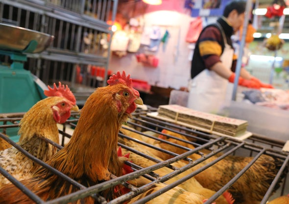 WHO Report on COVID Pandemic Origins Zeroes In on Animal Markets, Not Labs