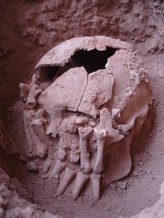 Septum Ring Brazil Archaeology