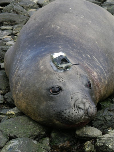 Seal Tracking