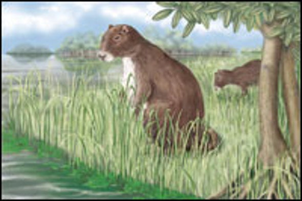 Giant Extinct Rodent Was Guinea Pig Relative