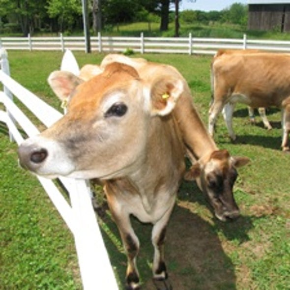 How Livestock Might Revitalize Degraded Agricultural Lands