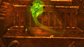 Unhealthy Glow: Fluorescent Tadpoles Expose Chemical Contamination