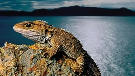 Can Scientists Save Species Threatened by Climate Change by Relocating Them?