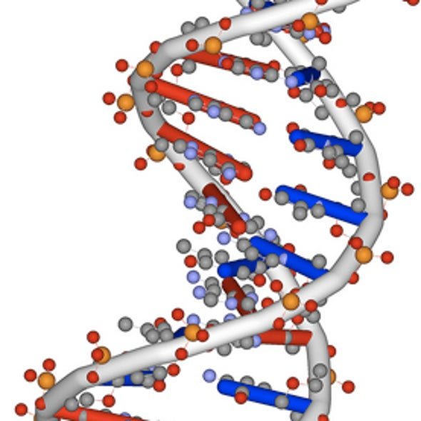 """Late Bloomers: """"New"""" Genes May Have Played a Role in Human Brain Evolution"""