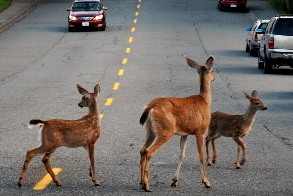 Roadkill Animals Are Surprising Sources of Drug Discovery