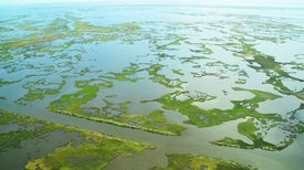 Mississippi Mud Might Stop Louisiana from Disappearing