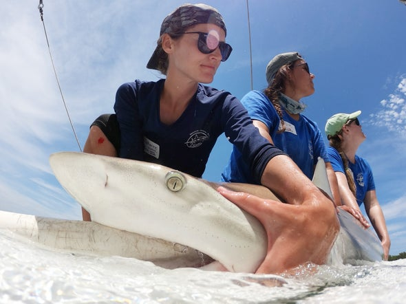 The Dark Side of Being a Female Shark Researcher