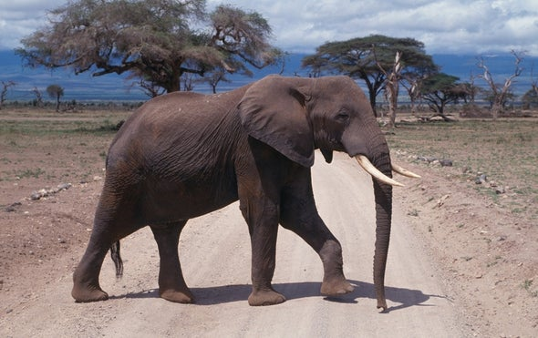 Elephant Footprints Become Tiny Critter Havens