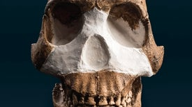 Controversy and Excitement Swirl around New Human Species