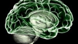 Consciousness-Raising: Kick-Starting the Brain's Dopamine System May Revive Some Vegetative Patients