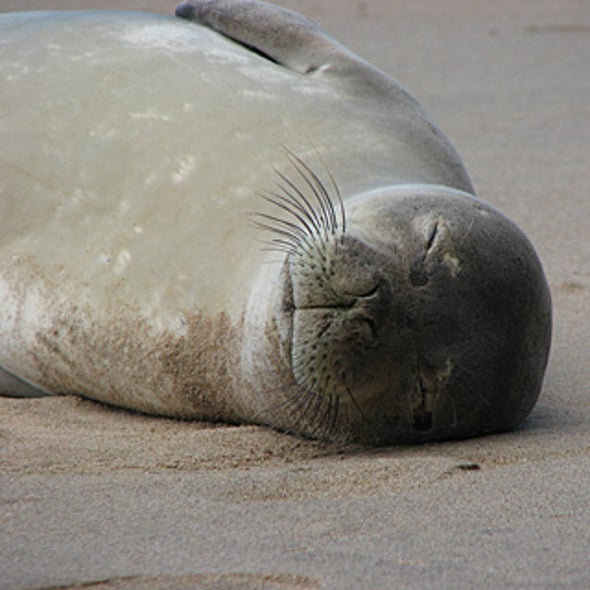 Will National Monument Status Save the Hawaiian Monk Seals?