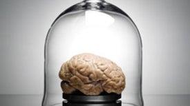The Neuroscience of True Grit