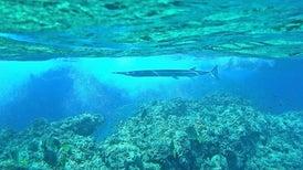 Abundant Sea Life, Part II: A Gallery of Creatures off Cabo Pulmo, Mexico