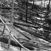 FELLED TREES: