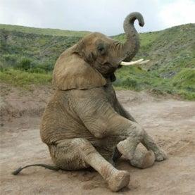 eBay,ivory,elephant,IFAW