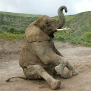Un-Netting Trade in Endangered Species: eBay Vows Crackdown on Illegal Ivory Sales