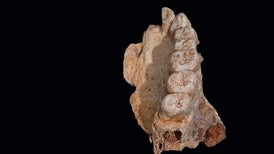 Controversial Fossil Hints <i>Homo sapiens</i> Blazed a Trail Out of Africa Earlier Than Thought