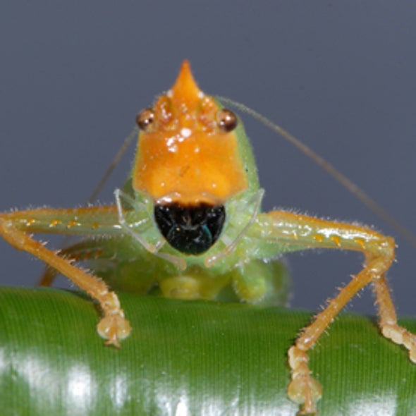 Bug-Eared: Human and Insect Ears Share Similar Structures