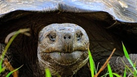 Abundant Sea Life, Part I: A Gallery of Creatures in the Galapagos