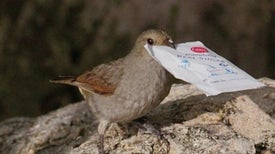 City Birds Outsmart Country Birds