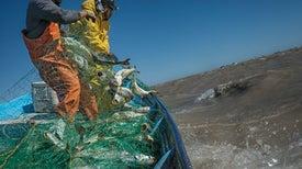 Goodbye, Vaquita: How Corruption and Poverty Doom Endangered Species