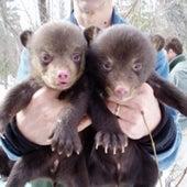 Cute as Teddy Bears