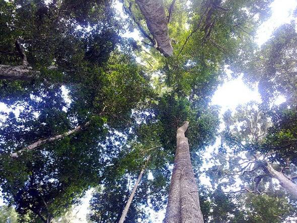 Tropics Feel the Heat of Climate Change