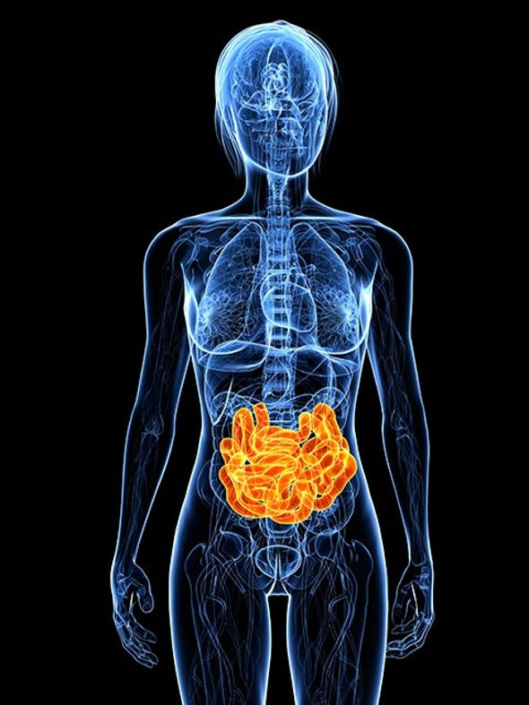 In Developing Brain Scientists Find >> The Tantalizing Links Between Gut Microbes And The Brain