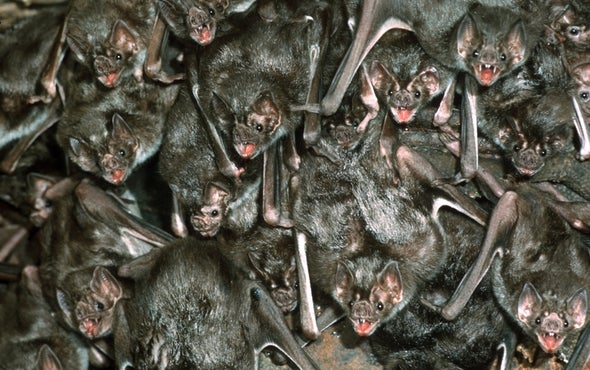 Blood Sisters: What Vampire Bats Can Teach Us about Friendship