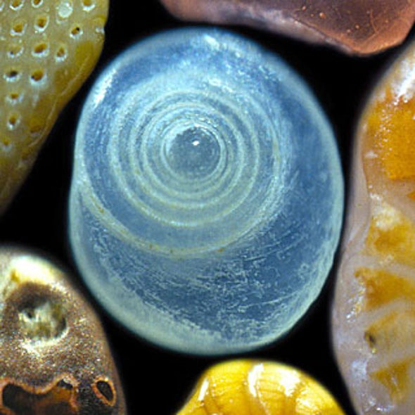 A Grain of Sand: Nature's Secret Wonder [Slide Show]