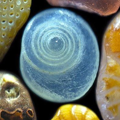 A Grain of Sand: Nature's Secret Wonder [Slide Show]