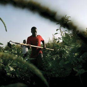 The Giant Ragweed Forest: A New Threat to Farming