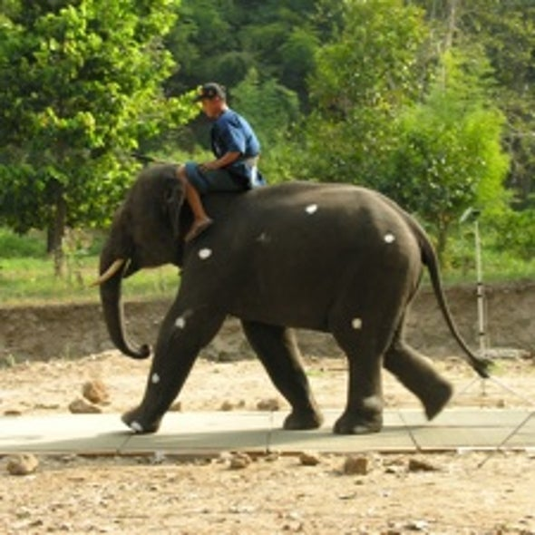 Motivating Question: When an Elephant Charges, Is It Walking or Running?