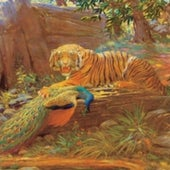 THE TIGER and the peacock