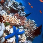 Troubled Waters: U.S. Sets Up Task force to Tackle Ocean Overfishing and Pollution
