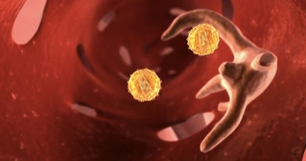 How Gene Therapy Targets Liver Cells [Video]