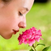 Human Nose Can Detect 1 Trillion Odors