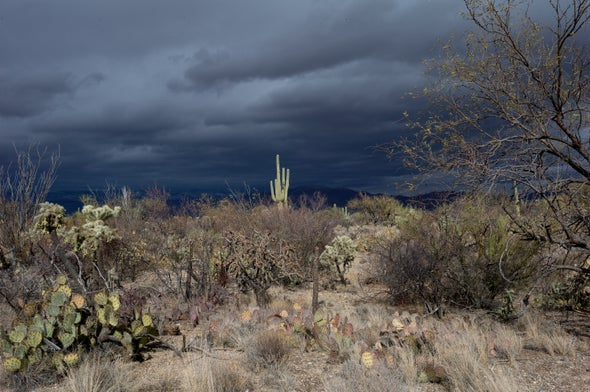 Unexpected: Desert Plants Are Struggling in Higher Heat