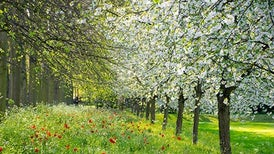"""Fact or Fiction?: """"Spring Fever"""" Is a Real Phenomenon"""