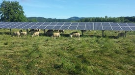 Farmland Is Also Optimal for Solar Power